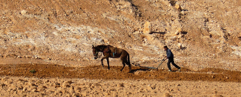 Politiques agricoles et dépendances alimentaires en Afrique du Nord