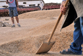 Les politiques agricoles et alimentaires dans la presse tunisienne