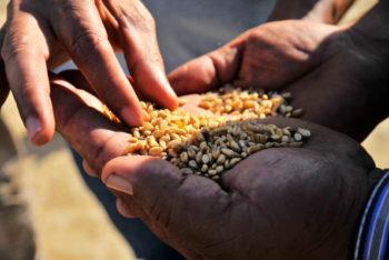 Sortir de l'ALECA et de l'ensemble du système alimentaire mondial : Pour une nouvelle politique agricole et alimentaire souveraine qui rompt définitivement avec la dépendance alimentaire et les marchés internationaux